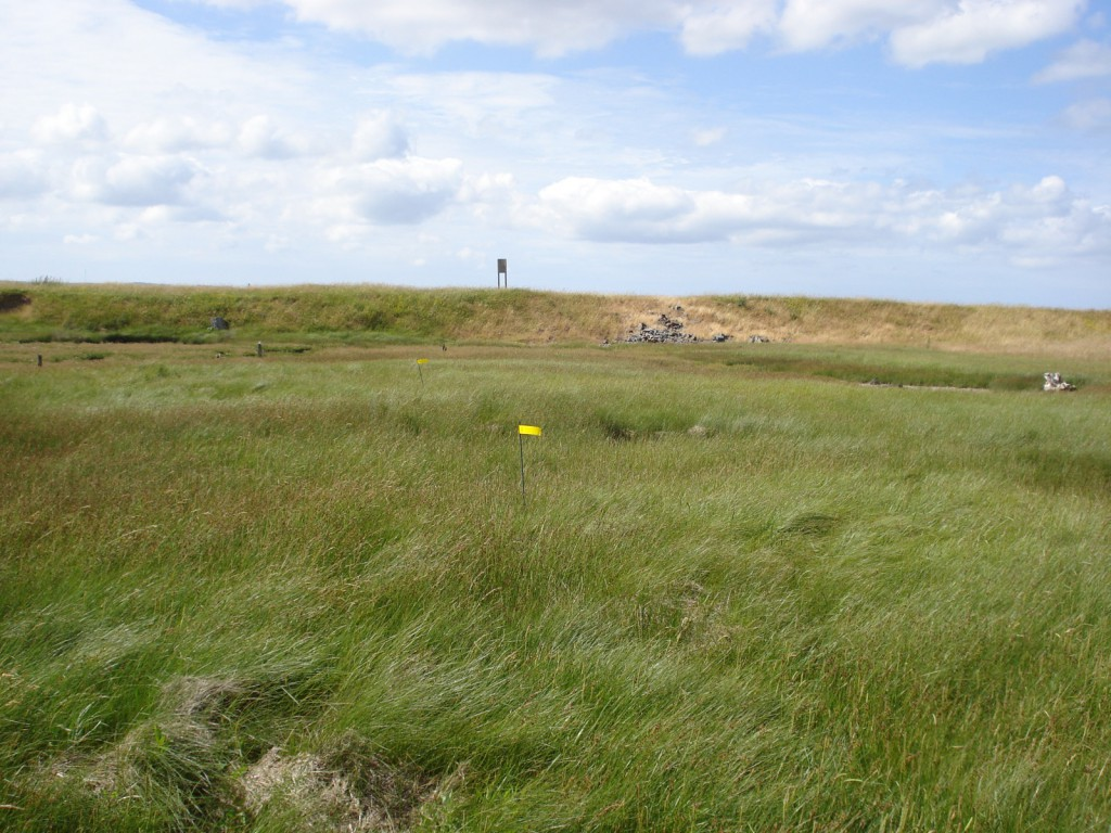 A transect is a line, here marked with a series of flags.