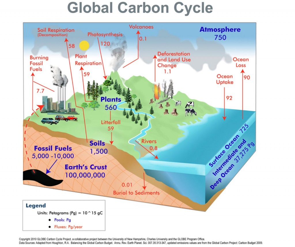 The carbon cycle refers to the continuous movement of carbon, the most abundant element on the planet, through the oceans, land, atmosphere, fossil fuels and all life on Earth.