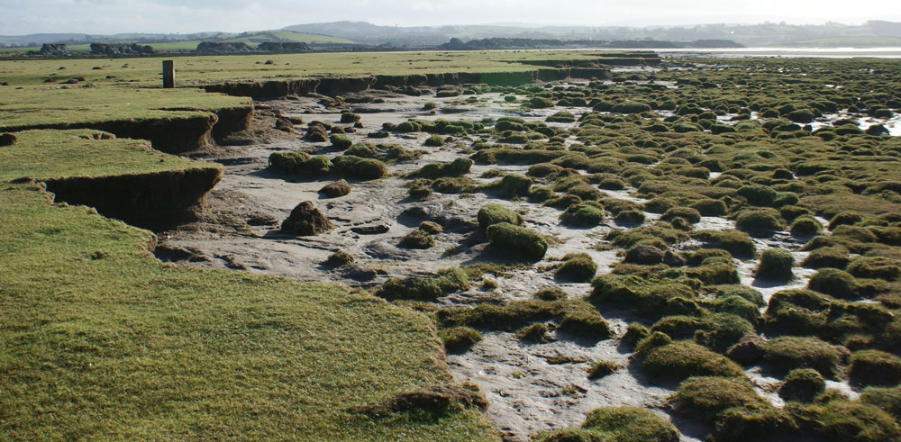 Salt marshes are a natural defence against coastal erosion and flooding. We need data to manage them effectively.