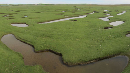 Creeks and pools on a salt marsh