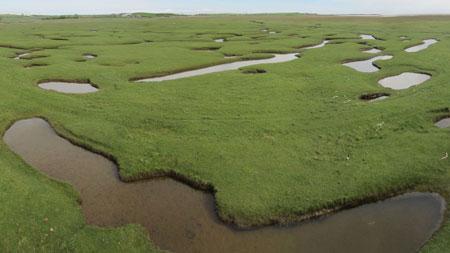 Creeks and pools on a salt marsh