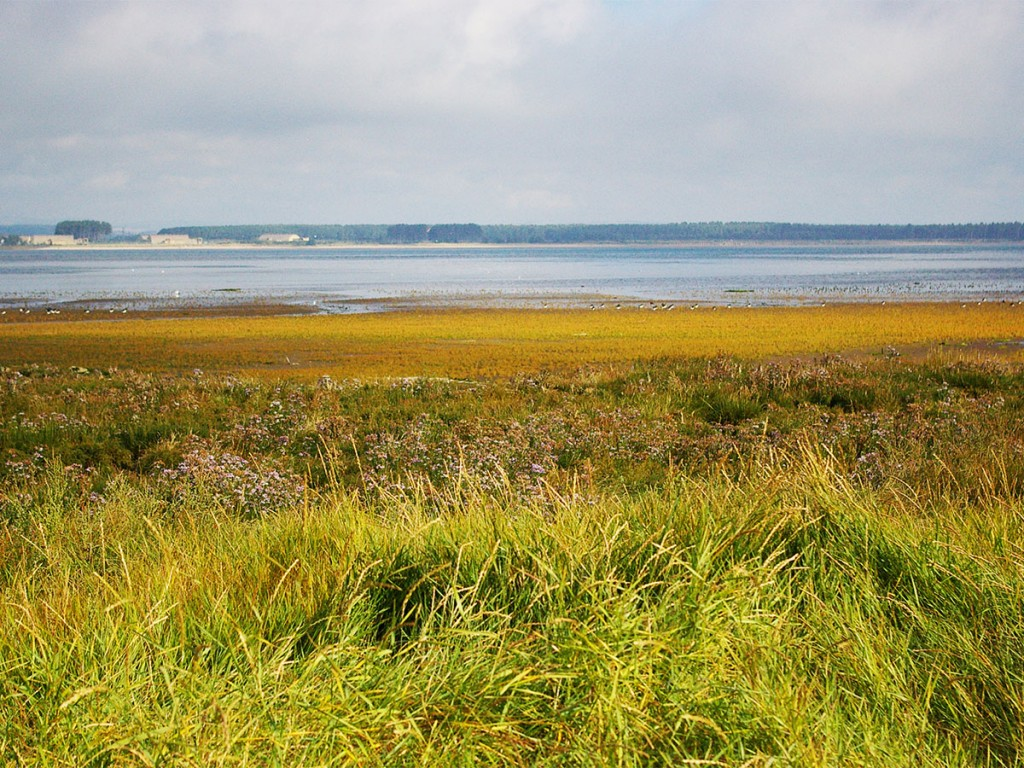 The plant community types are likely to be found in the mid to landward side of the marsh.