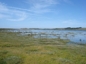 A salt marsh flooded at high tide
