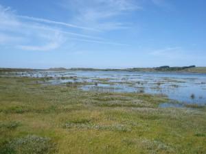 A salt marsh flooded at high tide
