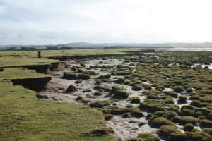 A changing salt marsh in Morecambe Bay, North-West England. The debris fields in front of an eroding cliff show signs of marsh recovery.